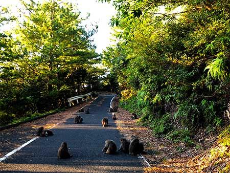 屋久島世界遺産